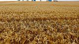 مصر تشتري 360 ألف طن من القمح في مناقصة دولية