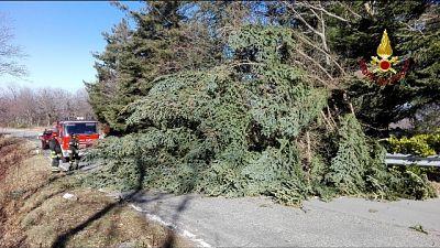 Vento abbatte decine alberi sull'Amiata