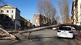 Cade albero su auto in centro, 2 feriti
