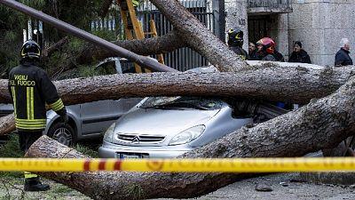Feriti da crollo albero, Pm Roma indaga