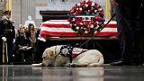 سولي كلب بوش الأب يبدأ عملا جديدا بمركز طبي