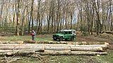 Taglia abusivamente 192 alberi,arrestato