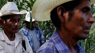 Mexican farmers urge 'mirror' tariffs on Trump's rural base