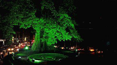 Freetown's Cotton Tree joins Ireland's Global Greening Initiative