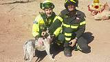 Cane bloccato in fiume, salvato da VVf