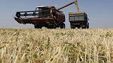 مؤسسة الحبوب السعودية تشتري 730 ألف طن من علف الشعير