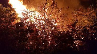 Incendi, fiamme in pineta nel Pistoiese