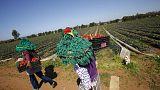 مندوبية التخطيط: تباطؤ نمو اقتصاد المغرب إلى 2.3% في الربع/1