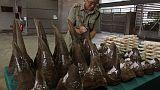 هونج كونج تضبط أكبر كمية مهربة خلال 5 أعوام من قرون وحيد القرن