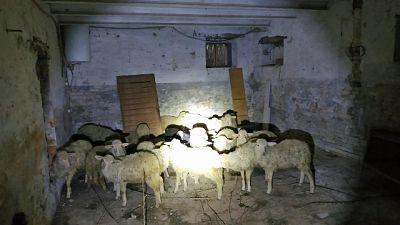Pasqua, Ccf salvano 26 agnelli