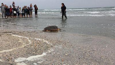 Riccione, tartaruga curata torna in mare