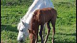 Horse Angels,lieto fine cavalli Delta Po