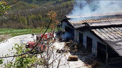 Incendio in una stalla, morte 250 mucche