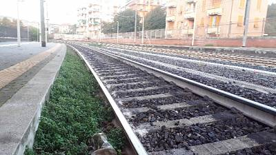 Treno urta albero su binari a Mantova