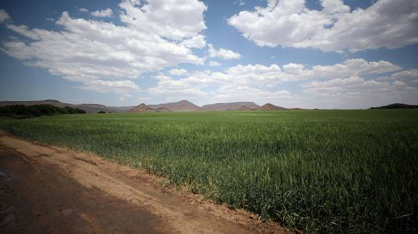 As elections loom, South Africans call for faster land reform