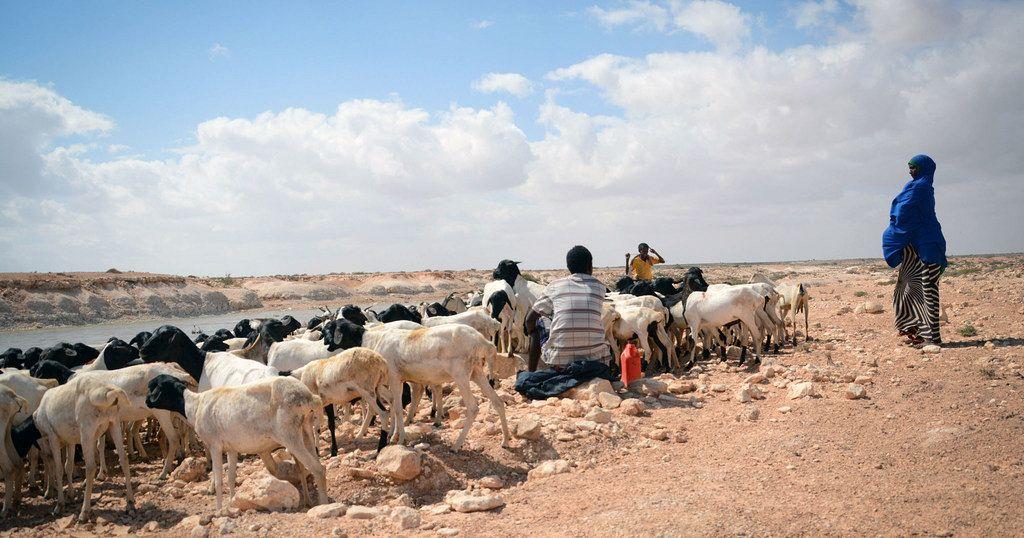 En Somalie Une Secheresse Synonyme De Grave Crise De La Faim Pour 2