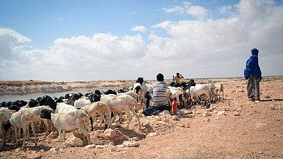 En Somalie, une sécheresse synonyme de grave crise de la faim pour 2 millions de personnes L'Organisation des Nations Unies pour l'alimentation et l'agriculture (FAO)