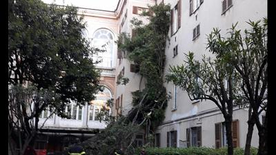Albero su padiglioni ospedale Genova