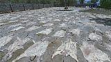 Peta demande au Kenya d'interdire le commerce de peaux d'ânes vers la Chine