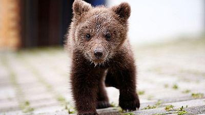 Orphaned bear cub Aida finds refuge in Bosnian village