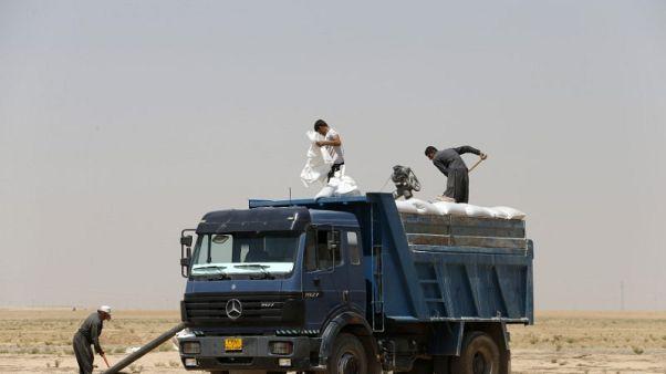 العراق اشترى ما يزيد عن 1.5 مليون طن من القمح المحلي