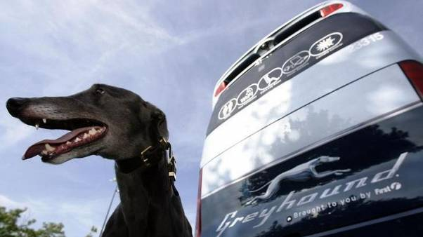 Greyhound for sale, owner First Group says