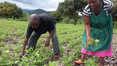 USAID Launches Farmer-to-Farmer Program in Zimbabwe