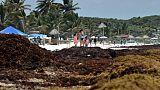 La plage de Tulum envahie par les sargasses, le 16 mai 2019 au Mexique