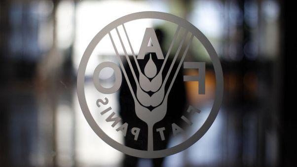 فاو: أسعار الغذاء العالمية ترتفع في مايو
