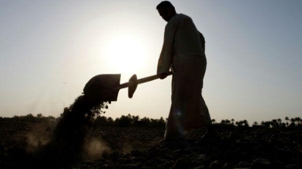 Dans le nord irakien, qui met le feu aux terres agricoles ?