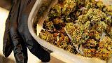Negozio cannabis, denunciato il titolare