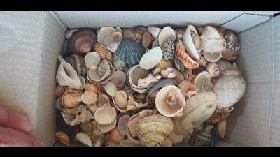 Spiagge sarde depredate,recuperati 280kg