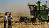En Syrie, la bataille du blé entre le régime et les autorités kurdes