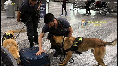Presa con droga a Malpensa grazie a cani
