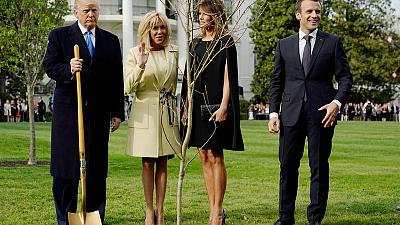 Macron to send new tree to Trump after oak gift died