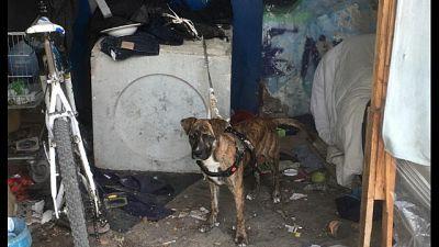 Cane al caldo senza cibo né acqua