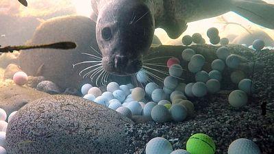 Pebble Beach aims to keep harmful golf balls out of ocean
