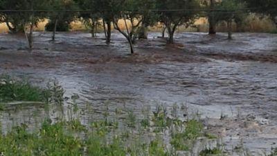 Coldiretti Puglia, campagne inondate