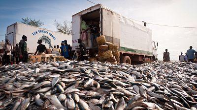 Greenpeace : l'industrie de la farine de poisson détourne la nourriture et les moyens de subsistance de l'Afrique de l'Ouest