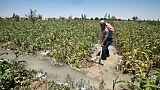 Radwan Hazaa, un agriculteur du village de Deir al-Asafir, dans la Ghouta orientale, près de Damas, le 10 juin 2019