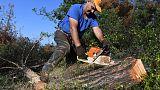 خنفساء اللحاء تجتاح مساحات كبيرة في غابة يونانية