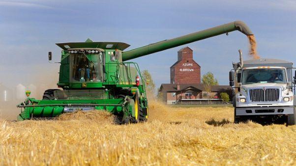 مؤسسة الحبوب السعودية تشتري 730 ألف طن من القمح