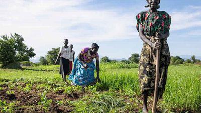 Les conflits prolongés et les mauvaises conditions climatiques exacerbent les besoins alimentaires