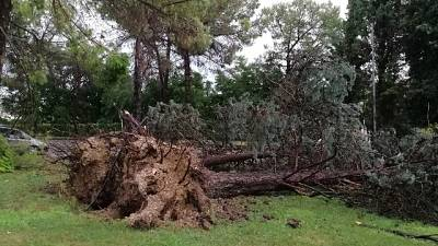 Jesi, alberi abbattuti e strade ostruite