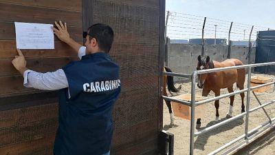 Box abusivi come scuderie per cavalli