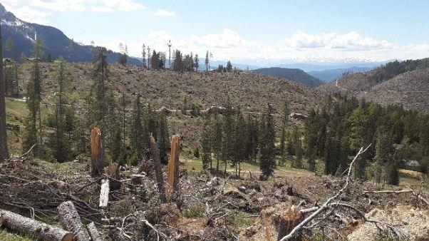Raccolta metà alberi schiantati in Aa