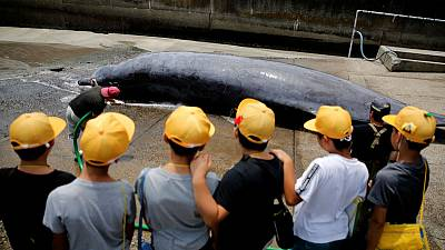 Japanese town celebrates first whale catch of the season