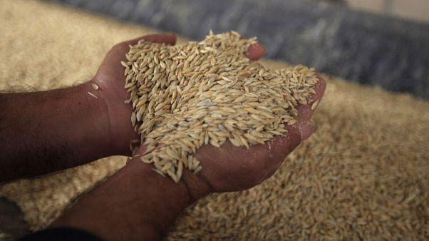 الجمارك: انخفاض فاتورة واردات الجزائر من الحبوب 19.5% في يناير-مايو