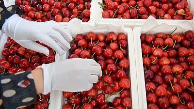 The pits: How China's U.S. tariff jab choked a cherry import boom