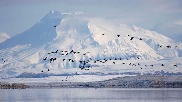 Trump administration swaps land to cut road through Alaska wildlife refuge